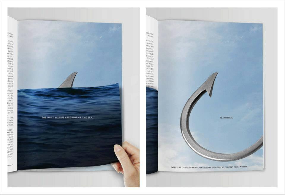 sensibilizzazione-squali