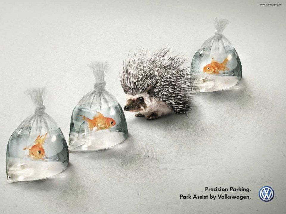 volkswagen-hedgehog-goldfish